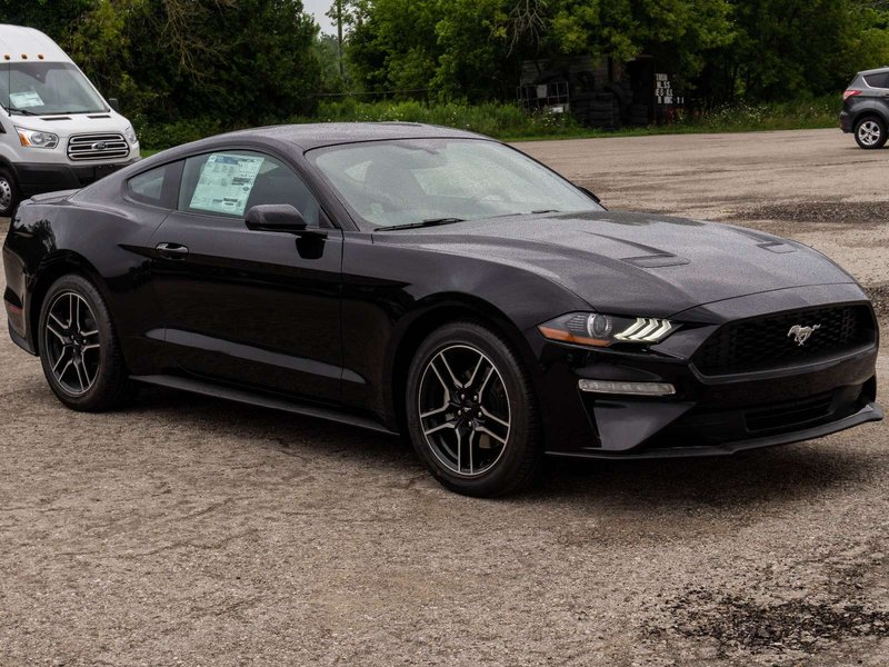 2019 Ford Mustang for sale in Listowel, Ontario